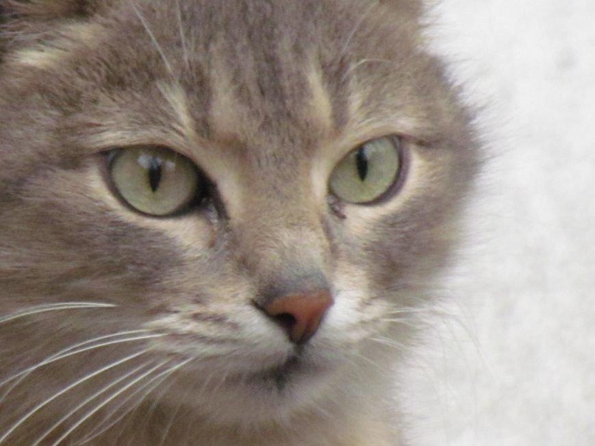 Фотопятница: «Планета мартовских котов», фото-8