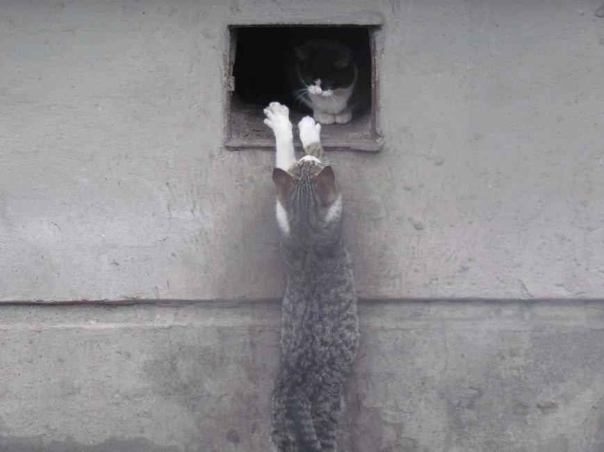 Фотопятница: «Планета мартовских котов», фото-4