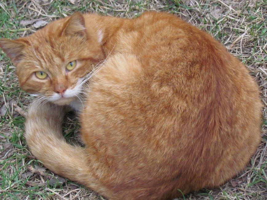 Фотопятница: «Планета мартовских котов», фото-15