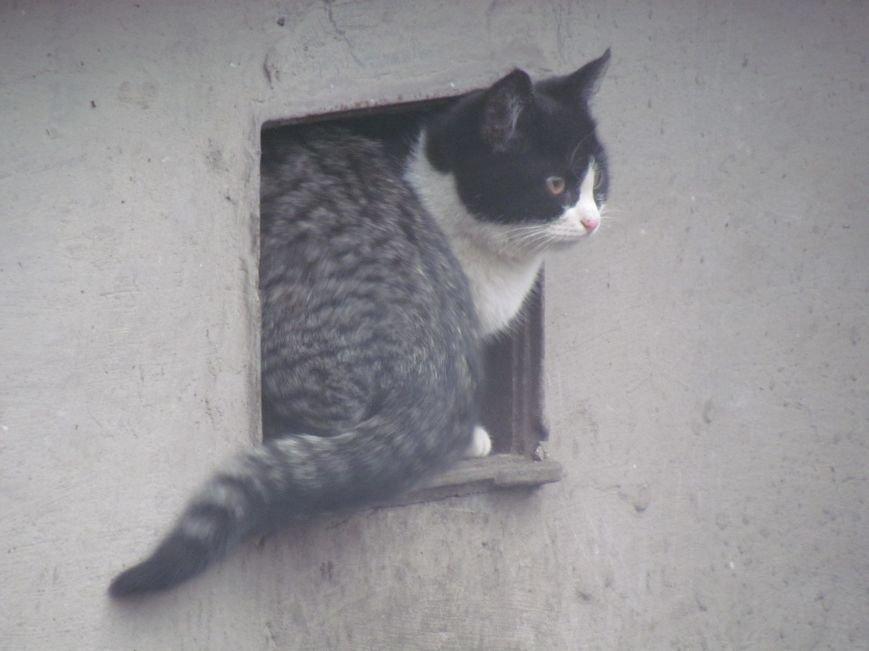 Фотопятница: «Планета мартовских котов», фото-26