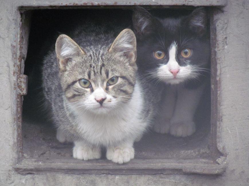 Фотопятница: «Планета мартовских котов», фото-30