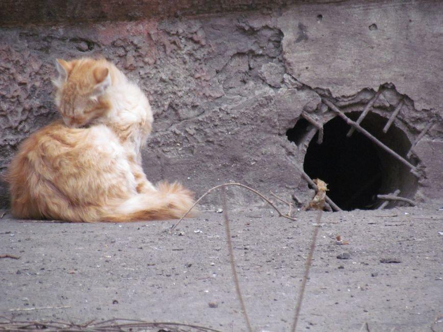 Фотопятница: «Планета мартовских котов», фото-22