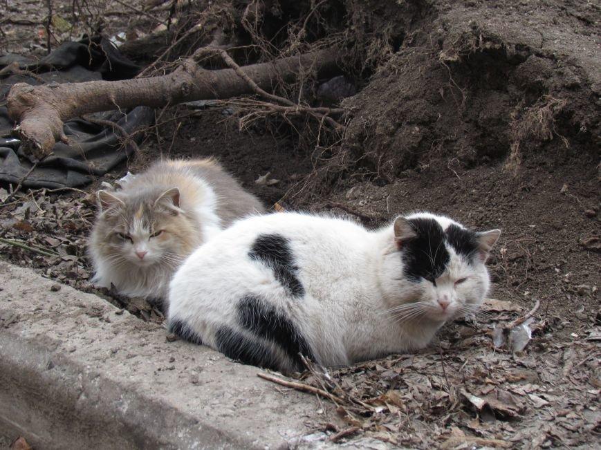 Фотопятница: «Планета мартовских котов», фото-23