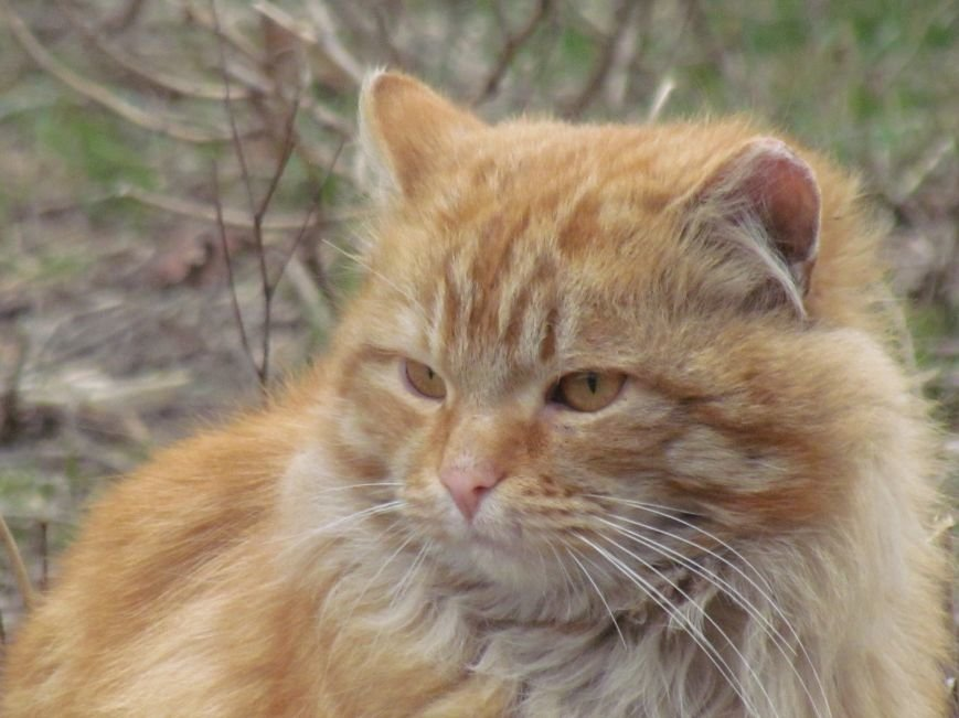 Фотопятница: «Планета мартовских котов», фото-20