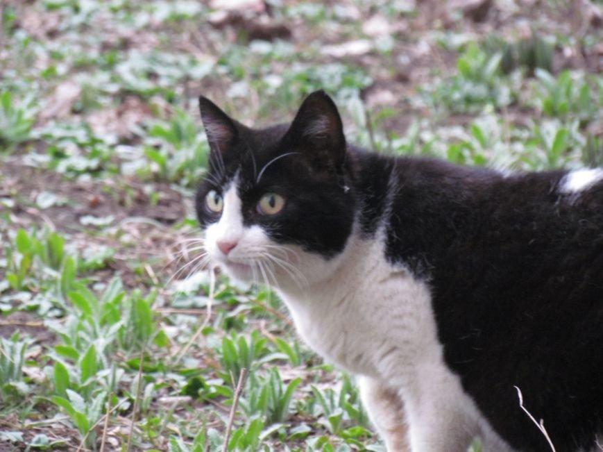 Фотопятница: «Планета мартовских котов», фото-16