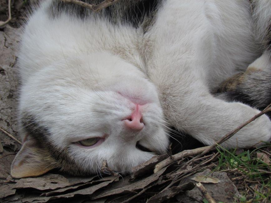 Фотопятница: «Планета мартовских котов», фото-31