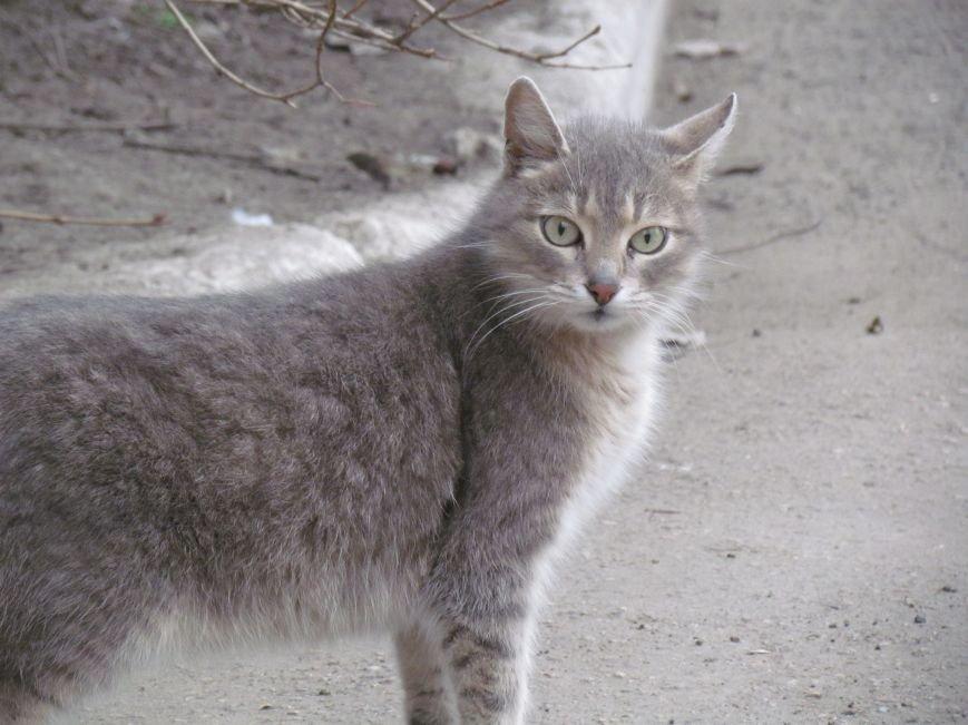 Фотопятница: «Планета мартовских котов», фото-5