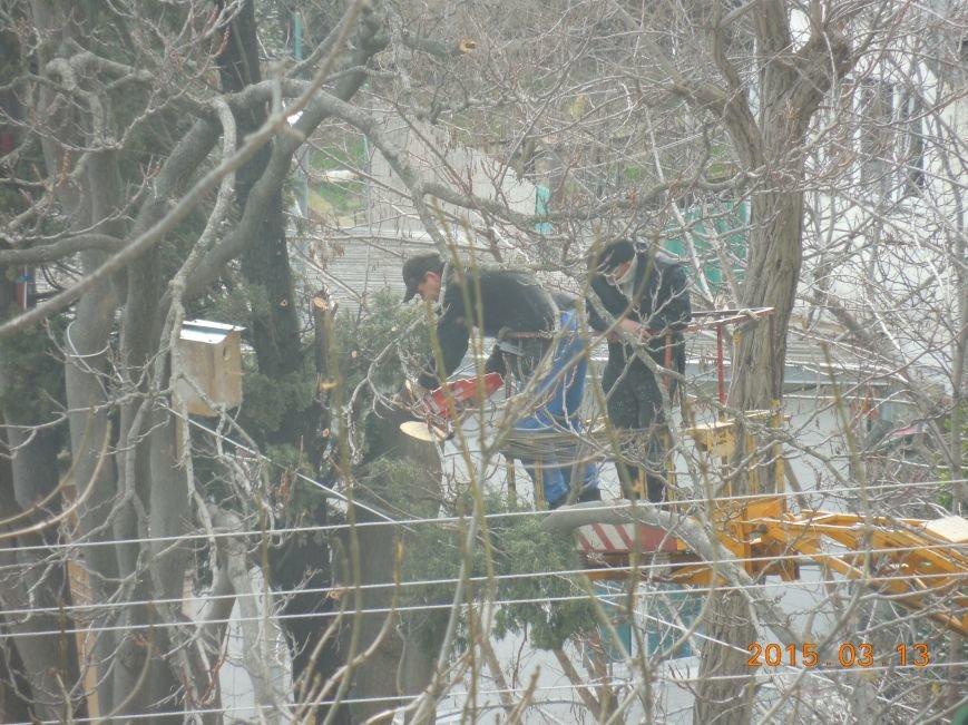 На Кирова, 89 спиливают кипарисы (фото) - фото 1