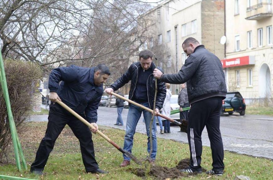 Ужгородські єдиноцентристи посадили 50 сакур – довкола УжНУ і на вулицях міста (ФОТО, ВІДЕО), фото-8