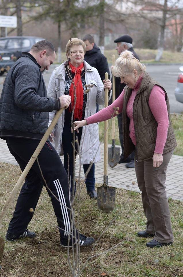 Ужгородські єдиноцентристи посадили 50 сакур – довкола УжНУ і на вулицях міста (ФОТО, ВІДЕО), фото-6