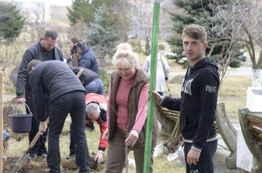 Ужгородські єдиноцентристи посадили 50 сакур – довкола УжНУ і на вулицях міста (ФОТО, ВІДЕО), фото-2