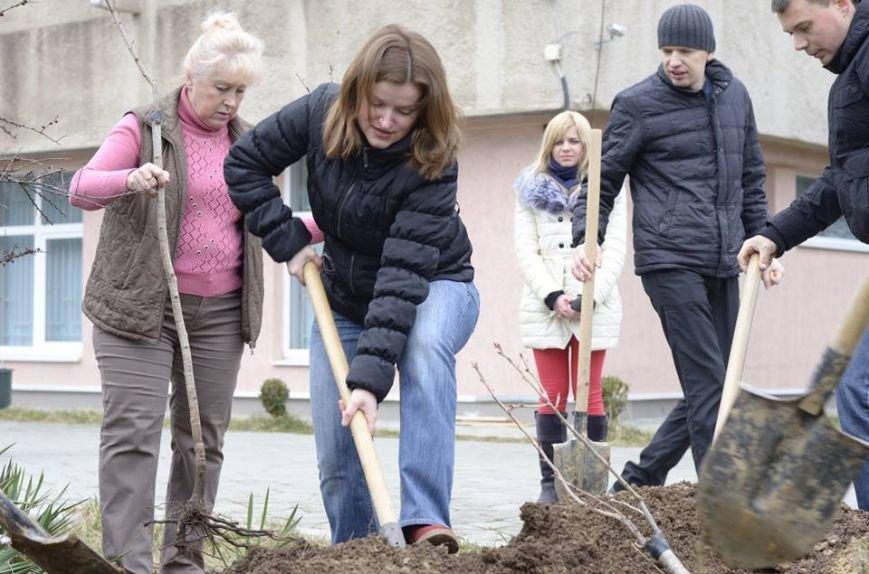 Ужгородські єдиноцентристи посадили 50 сакур – довкола УжНУ і на вулицях міста (ФОТО, ВІДЕО), фото-4