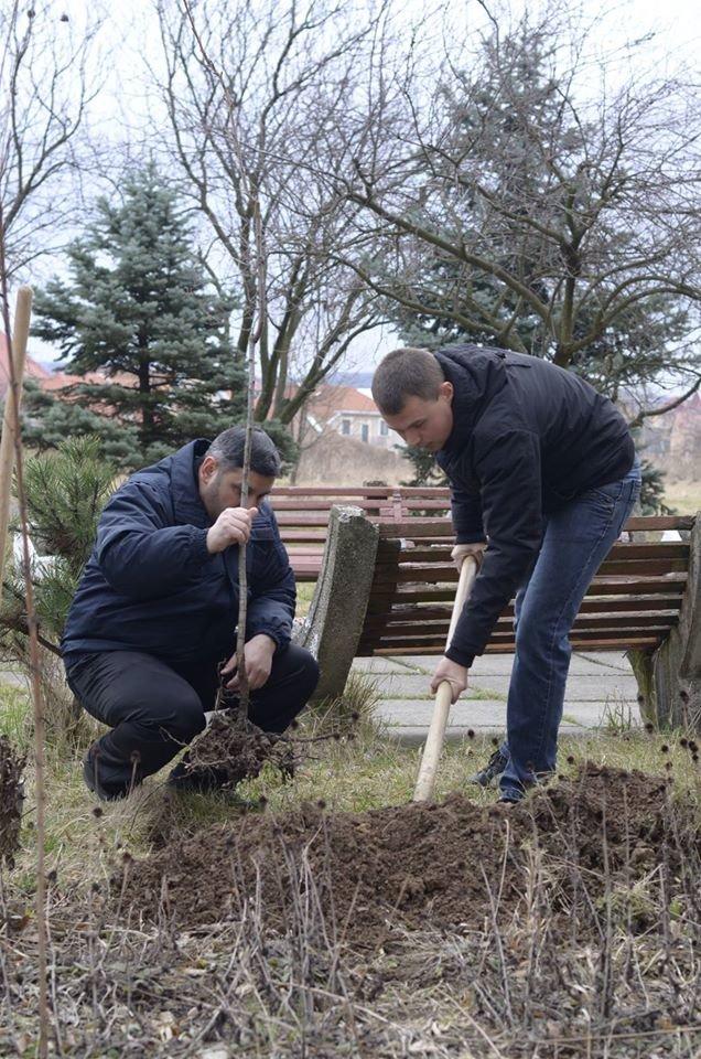 Ужгородські єдиноцентристи посадили 50 сакур – довкола УжНУ і на вулицях міста (ФОТО, ВІДЕО), фото-1