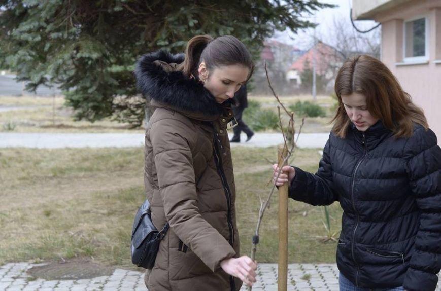 Ужгородські єдиноцентристи посадили 50 сакур – довкола УжНУ і на вулицях міста (ФОТО, ВІДЕО), фото-5