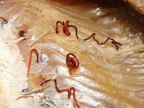 На Тернопільщині чоловік зловив небезпечну рибу (фото) (фото) - фото 1