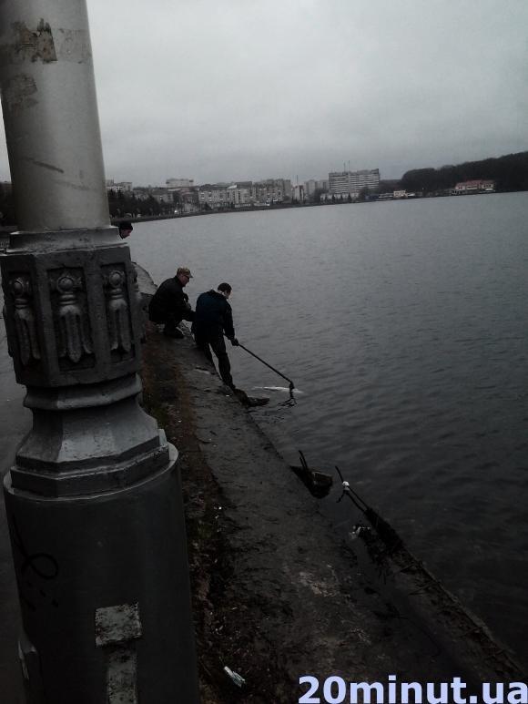 Чому в Тернопільському ставі гине риба? (фото) (фото) - фото 1
