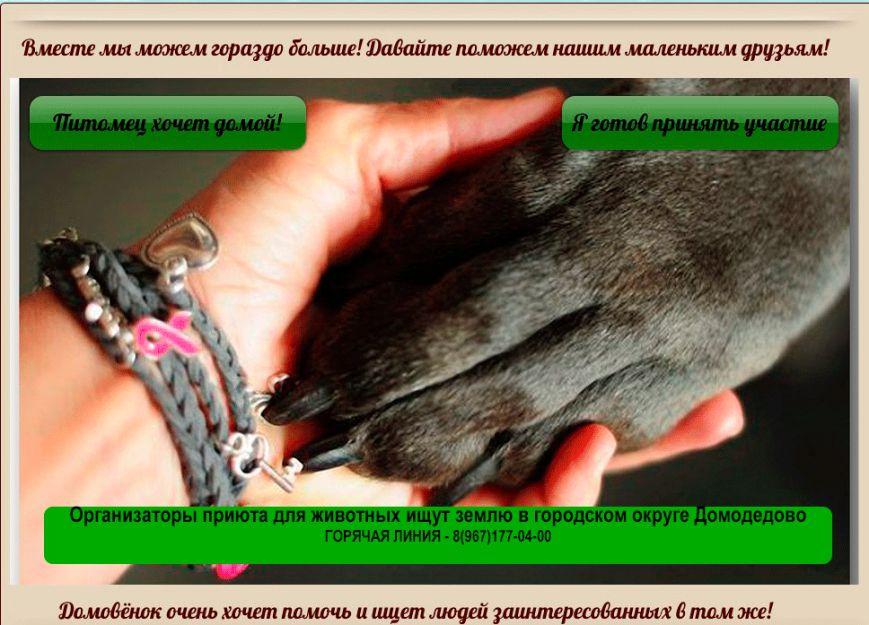 Организаторы приюта для животных ищут землю в городском округе Домодедово (фото) - фото 1