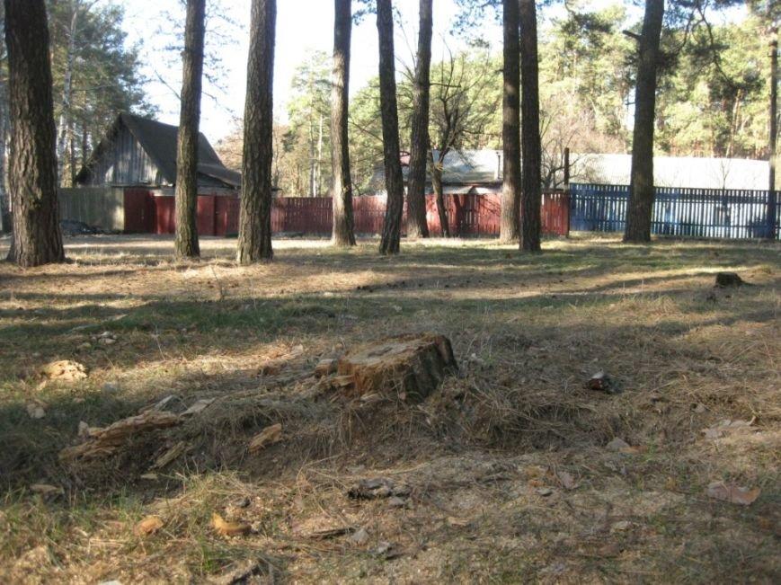 В Яловщине черниговцы рубят деревья, фото-2