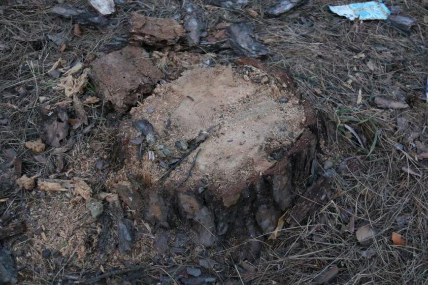 В Яловщине черниговцы рубят деревья, фото-4