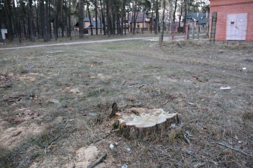 В Яловщине черниговцы рубят деревья, фото-1