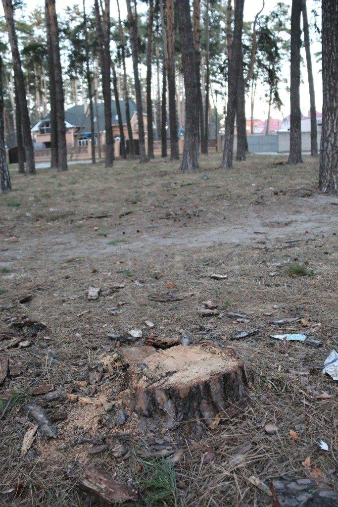 В Яловщине черниговцы рубят деревья, фото-3