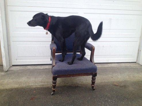 luna-on-chairs-2-jpg