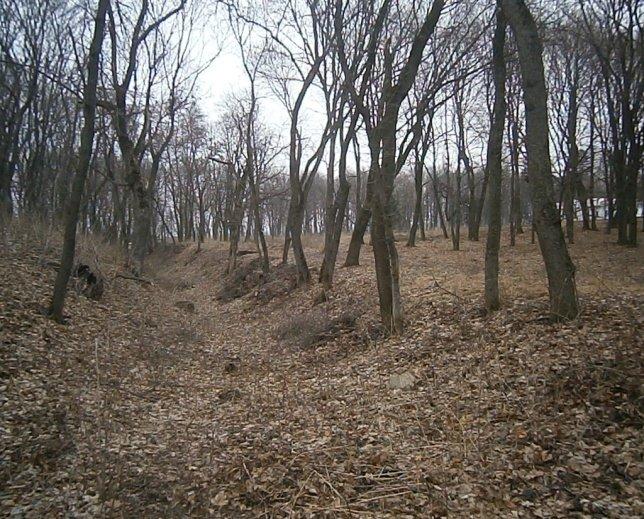 Усадьбе Лизогубов в 30 километрах от Чернигова нужна помощь (фото) - фото 1