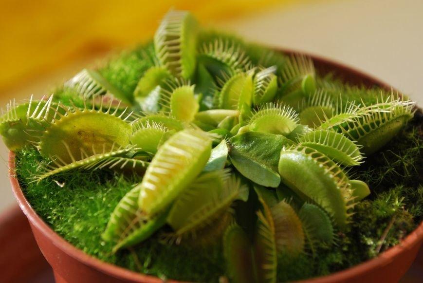 Открой для себя плотоядное растение вместе с нами!, фото-2