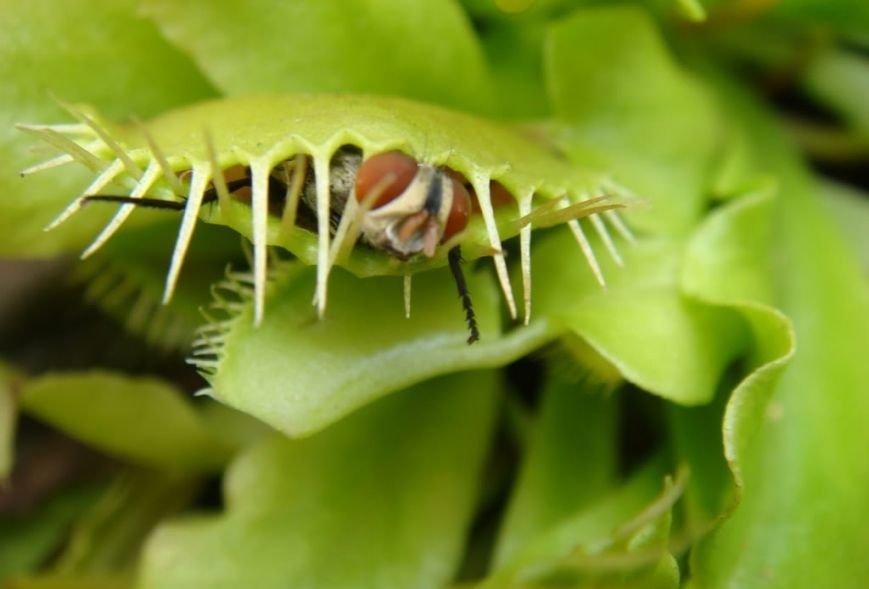 Открой для себя плотоядное растение вместе с нами!, фото-1