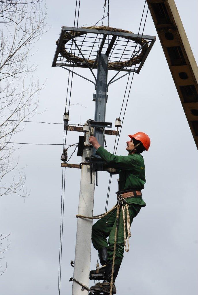 Весною для лелек побудують 120 «євроосель» (ФОТО) (фото) - фото 1