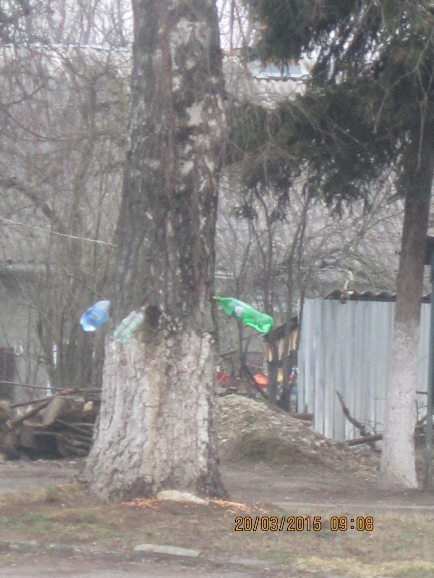 На вул. Гагаріна невідомі просверлили старі береза. Тернополяни викликали міліцію (фото) (фото) - фото 1