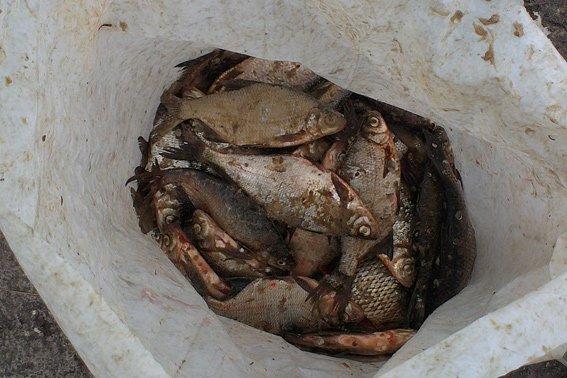 Правоохоронці затримали двох жителів одного із сіл Золотоніського району, які займалися незаконним виловом риби (фото) - фото 1