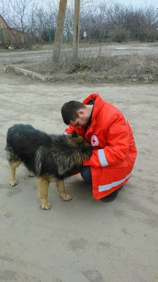 Мариупольцы  готовы пристроить брошенных  в поселке Широкино собак (Фотофакт), фото-1