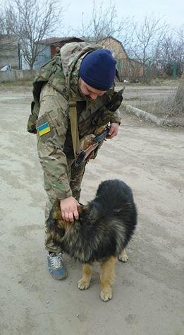 Мариупольцы  готовы пристроить брошенных  в поселке Широкино собак (Фотофакт), фото-2