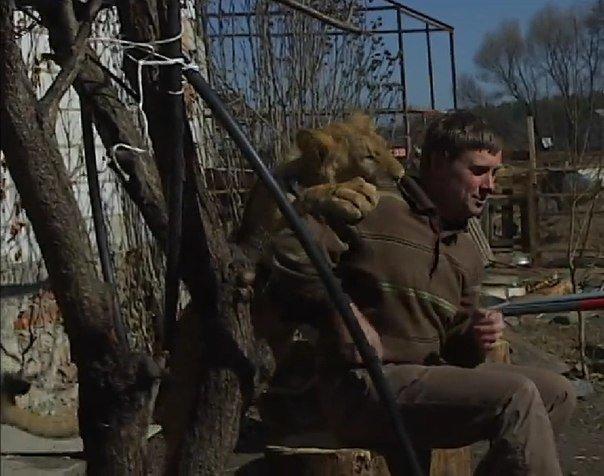 На Черкащині прихистили лева, який утік із Луганської області (фото) - фото 1