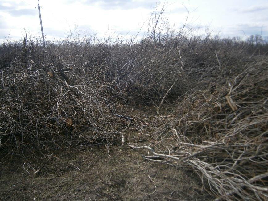 Спиленные ветви деревьев с центра Красноармейска «перекочевали» на окраину (ФОТОРЕПОРТАЖ) (фото) - фото 8