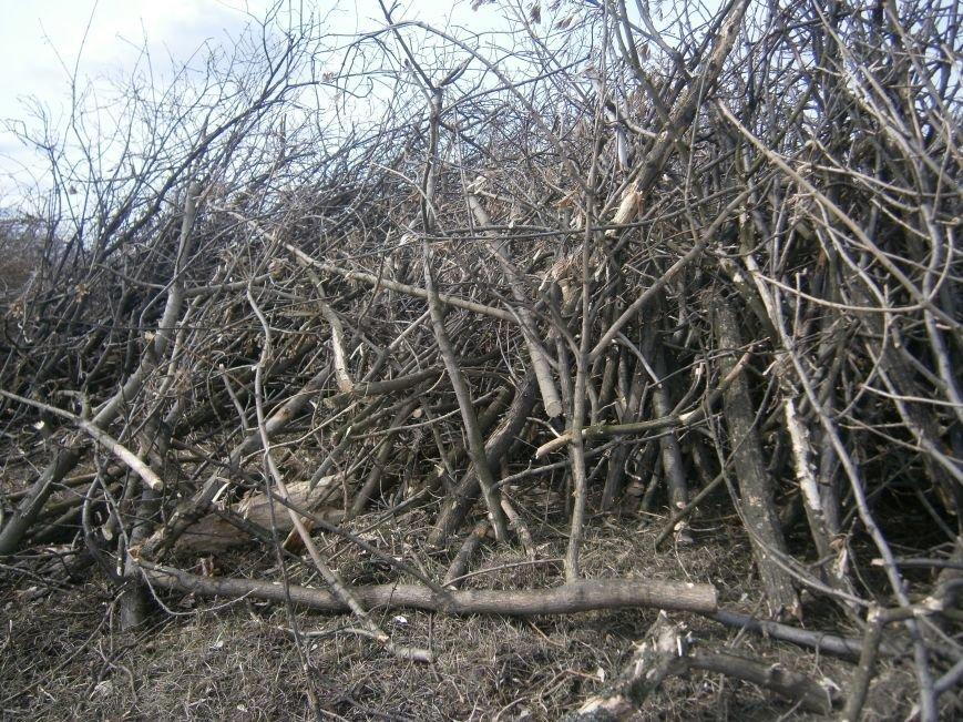 Спиленные ветви деревьев с центра Красноармейска «перекочевали» на окраину (ФОТОРЕПОРТАЖ) (фото) - фото 7