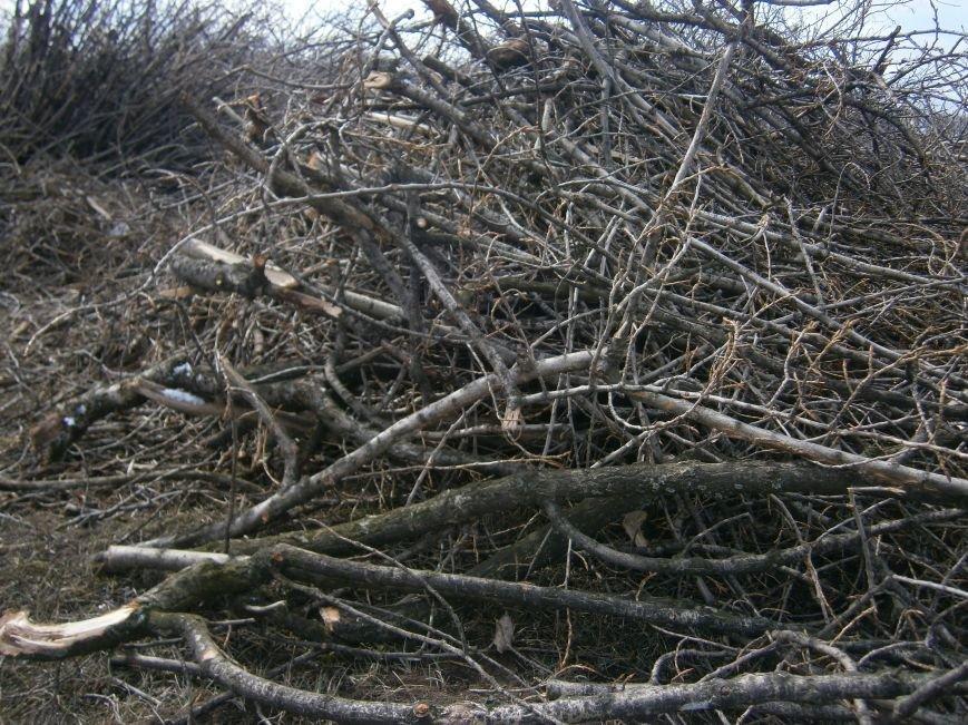 Спиленные ветви деревьев с центра Красноармейска «перекочевали» на окраину (ФОТОРЕПОРТАЖ) (фото) - фото 9
