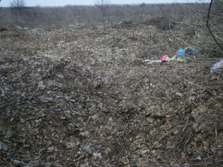 Спиленные ветви деревьев с центра Красноармейска «перекочевали» на окраину (ФОТОРЕПОРТАЖ) (фото) - фото 13