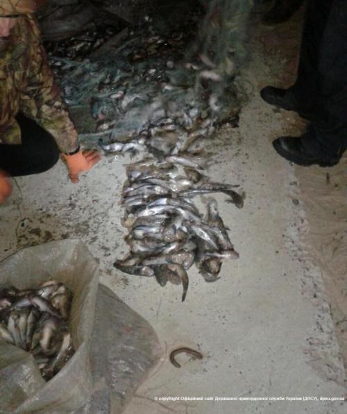 В районе Мариуполя пограничники задержали браконьеров, фото-1