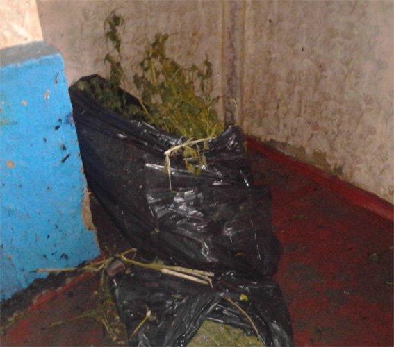 На Кировоградщине работники милиции изъяли из незаконного оборота наркотические средства. ФОТО (фото) - фото 1