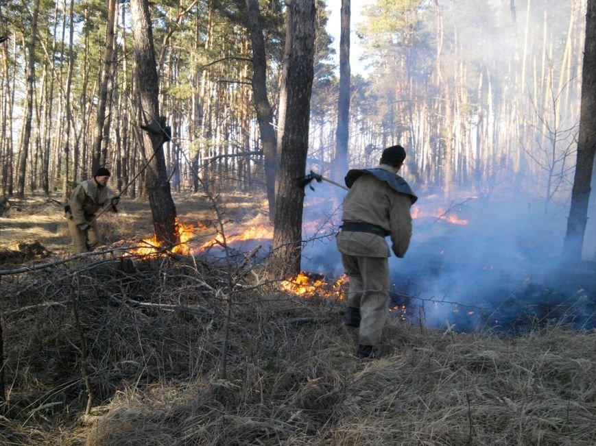 Масштабна пожежа на Полтавщині, вигоріло 15 гектарів (фото) - фото 1