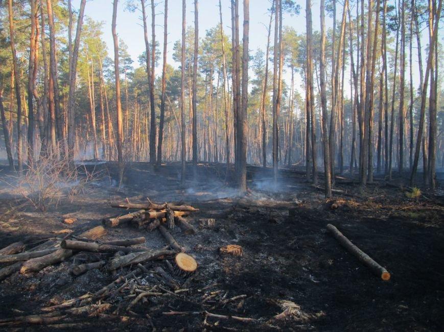 Масштабна пожежа на Полтавщині, вигоріло 15 гектарів (фото) - фото 2