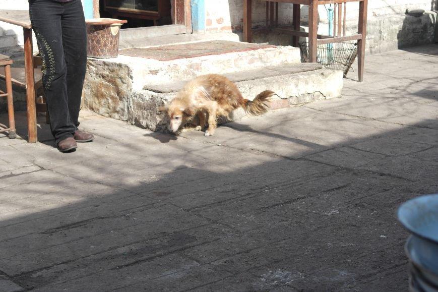 Донецкий приют для животных переехал в Красноармейский район: четвероногие переселенцы нуждаются в помощи, фото-22