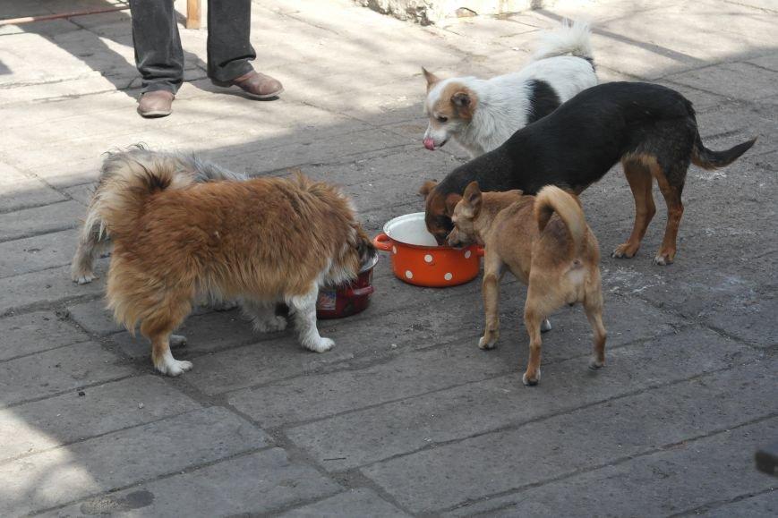 Донецкий приют для животных переехал в Красноармейский район: четвероногие переселенцы нуждаются в помощи, фото-5
