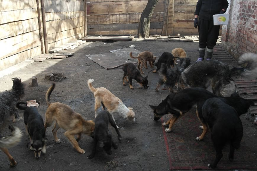 Донецкий приют для животных переехал в Красноармейский район: четвероногие переселенцы нуждаются в помощи, фото-3