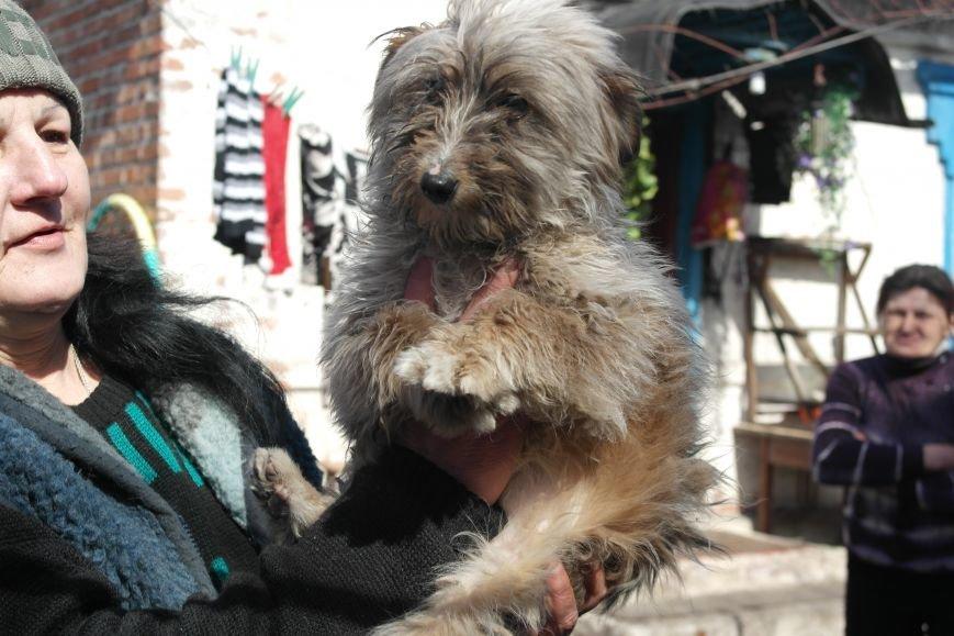 Донецкий приют для животных переехал в Красноармейский район: четвероногие переселенцы нуждаются в помощи, фото-24