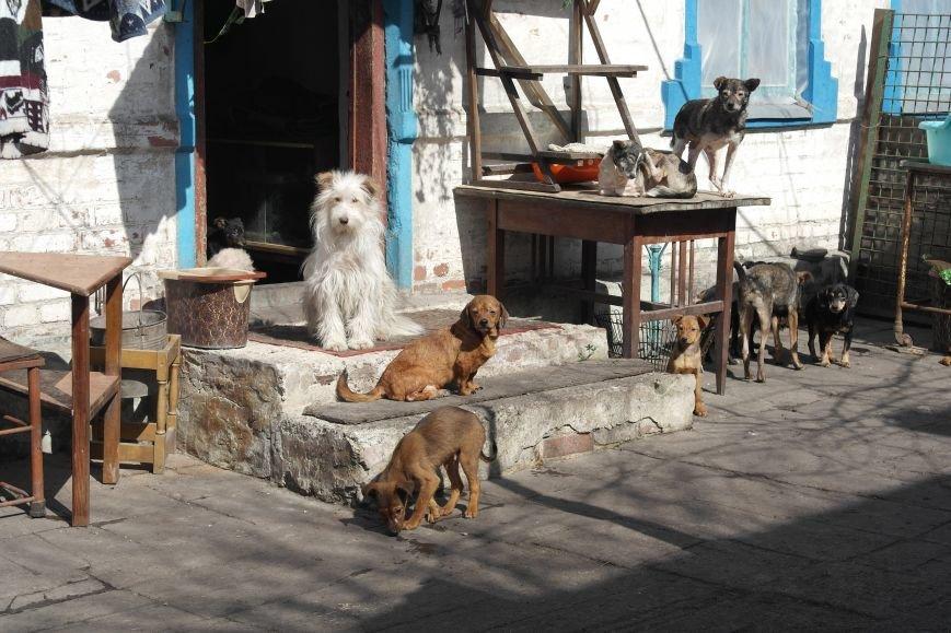 Донецкий приют для животных переехал в Красноармейский район: четвероногие переселенцы нуждаются в помощи, фото-10
