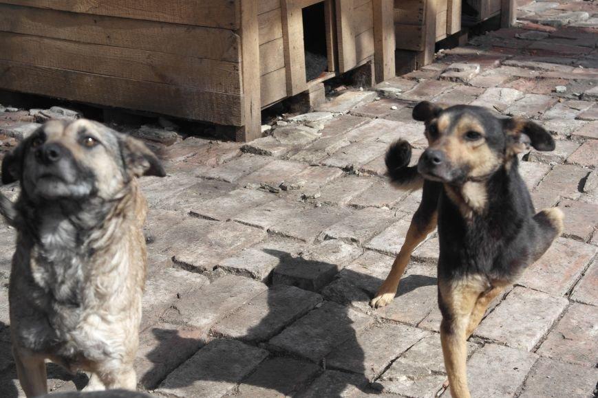 Донецкий приют для животных переехал в Красноармейский район: четвероногие переселенцы нуждаются в помощи, фото-16