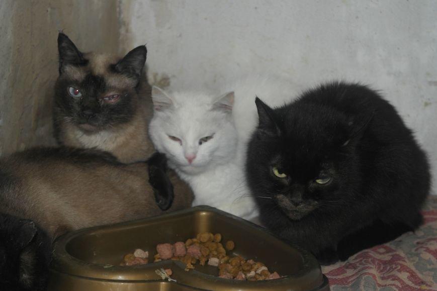 Донецкий приют для животных переехал в Красноармейский район: четвероногие переселенцы нуждаются в помощи, фото-20